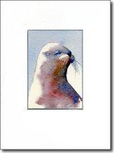 Sea Lion image