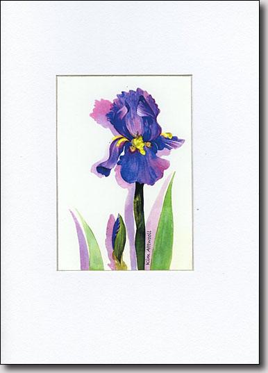 Friendship Iris image