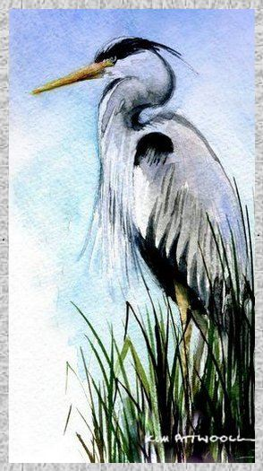 great blue heron image