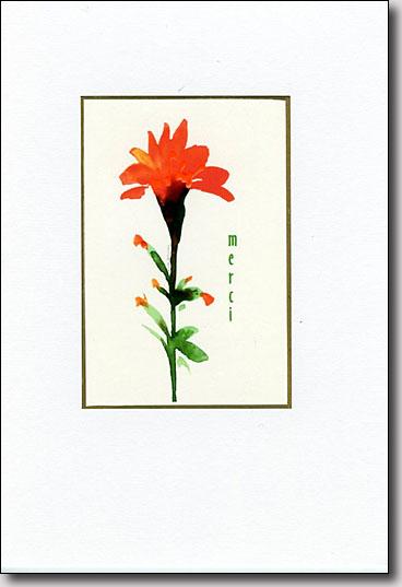 Indian Paintbrush Merci image