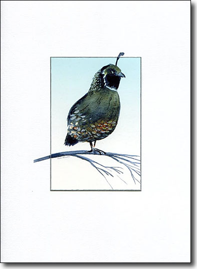 quail image