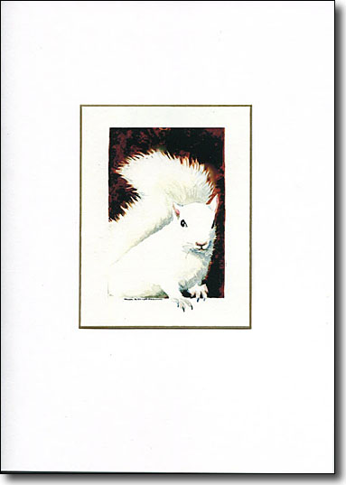 White Squirrel image